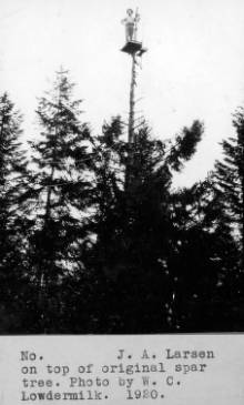 &#34;J.A. Larsen on top of original spar tree.&#34;<br&gt;538