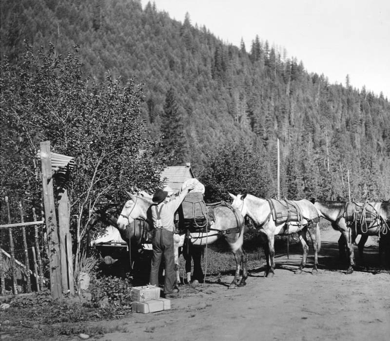 Pack String at O'Hara Ranger Station,  O'Hara Ranger Station<br />Pack String at O'Hara Ranger Station,  O'Hara Ranger Station , Swan, K. D., 1925
