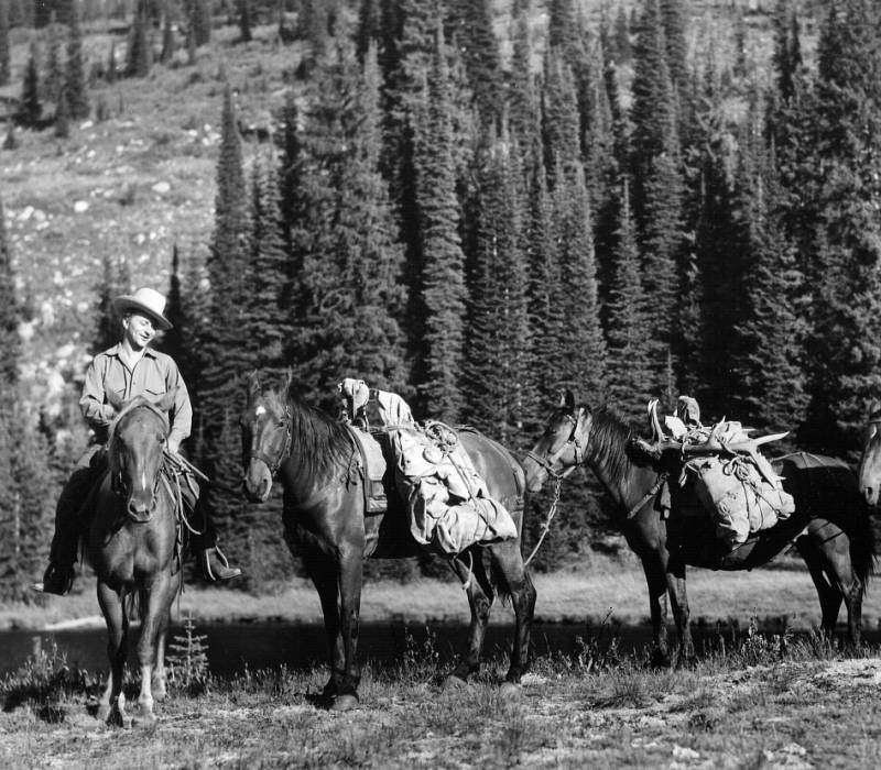 Two pack horses bringing in the carcass of a bull elk killed near Elk Summit,Selway-Bitterroot Primitive Area<br />Two pack horses bringing in the carcass of a bull elk killed near Elk Summit,Selway-Bitterroot Primitive Area , Swan, K. D. , 1937