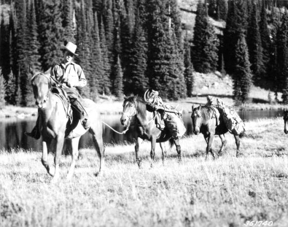 Two pack horses bring in the carcass of a huge bull  elk killed near Elk Summit, Selway-Bitterroot Primitive Area<br />Two pack horses bring in the carcass of a huge bull  elk killed near Elk Summit, Selway-Bitterroot Primitive Area, Swan, K. D., 1937