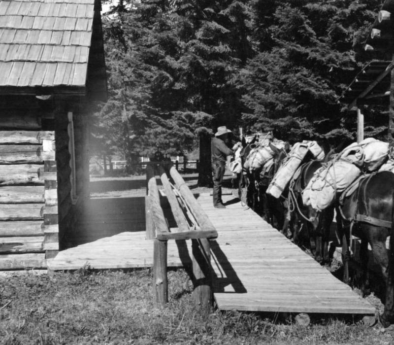 Use of a loading platform for safety and ease in loading cargo on pack stock. Reginald Blundell, packer., Moose Creek Ranger Station<br />Use of a loading platform for safety and ease in loading cargo on pack stock. Reginald Blundell, packer., Moose Creek Ranger Station, Blackerby, A. W., 1957-08-14