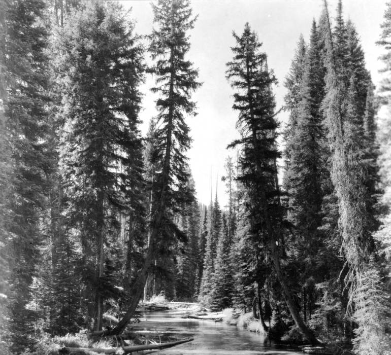 Fishing in Bargemon Creek, Nez Perce National Forest<br />Fishing in Bargemon Creek, Nez Perce National Forest, Swan, K.D., 1938-08-01