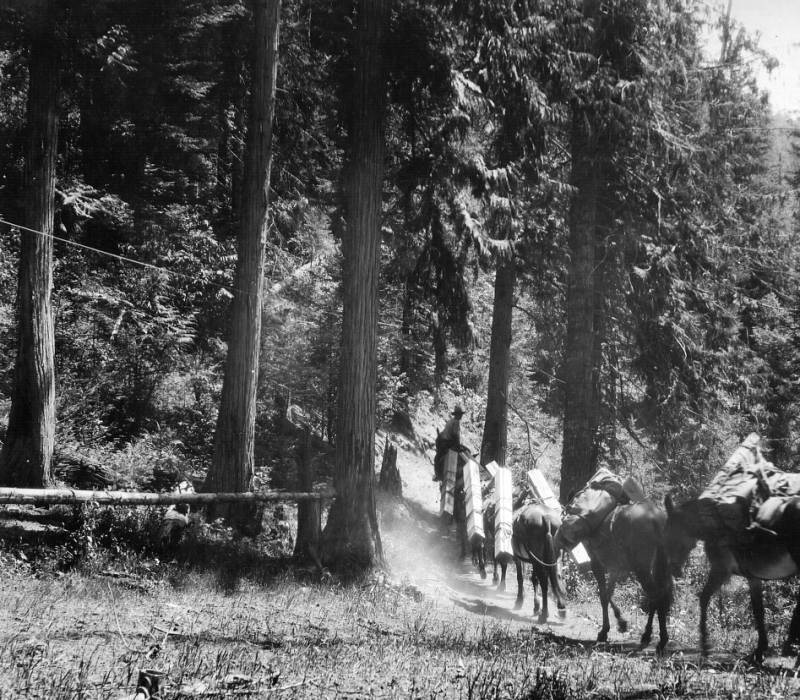 Packing lumber for Freeman Peak lookout cabin, Selway National Forest<br />Packing lumber for Freeman Peak lookout cabin, Selway National Forest, Swan, K. D., 1925