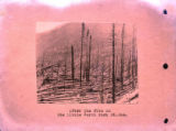 After the fire on the Little North Fork, St. Joe River. 1910 Forest fire - copy. Copied for S.A....