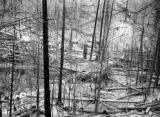 Forest Fire 1910 - Wallace [1910] Placer Creek after the fire.