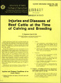 Injuries and diseases of beef cattle at the time of calving and breeding