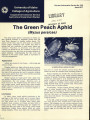 The green peach aphid: Myzus persicae
