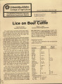 Lice on beef cattle