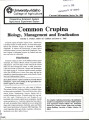 Common Crupina: biology, management and eradication