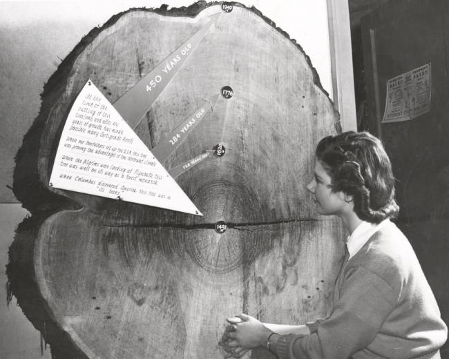 University of Idaho Forestry student studying tree-ring dates, 1940