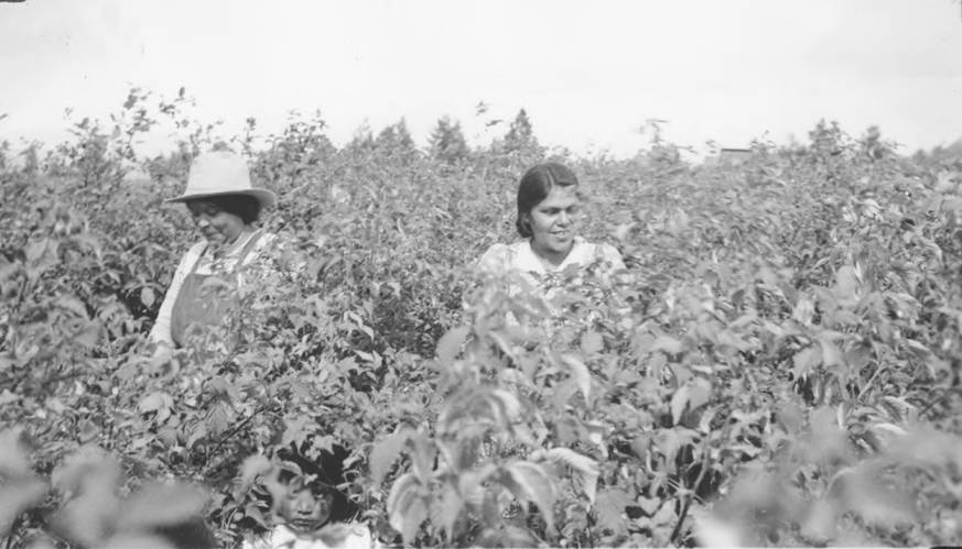 item thumbnail for Women in raspberry patch