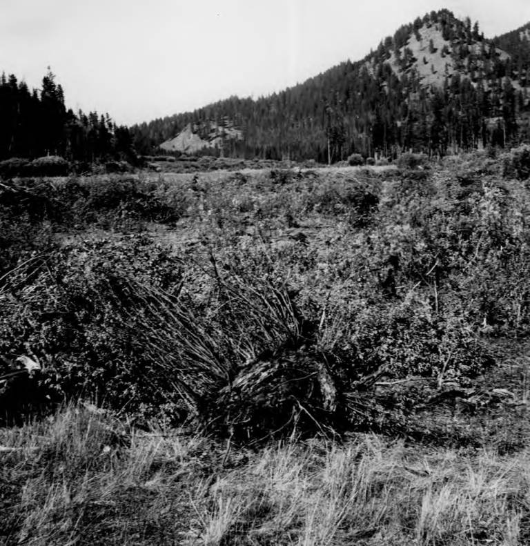 item thumbnail for Landing Field at Root Ranch