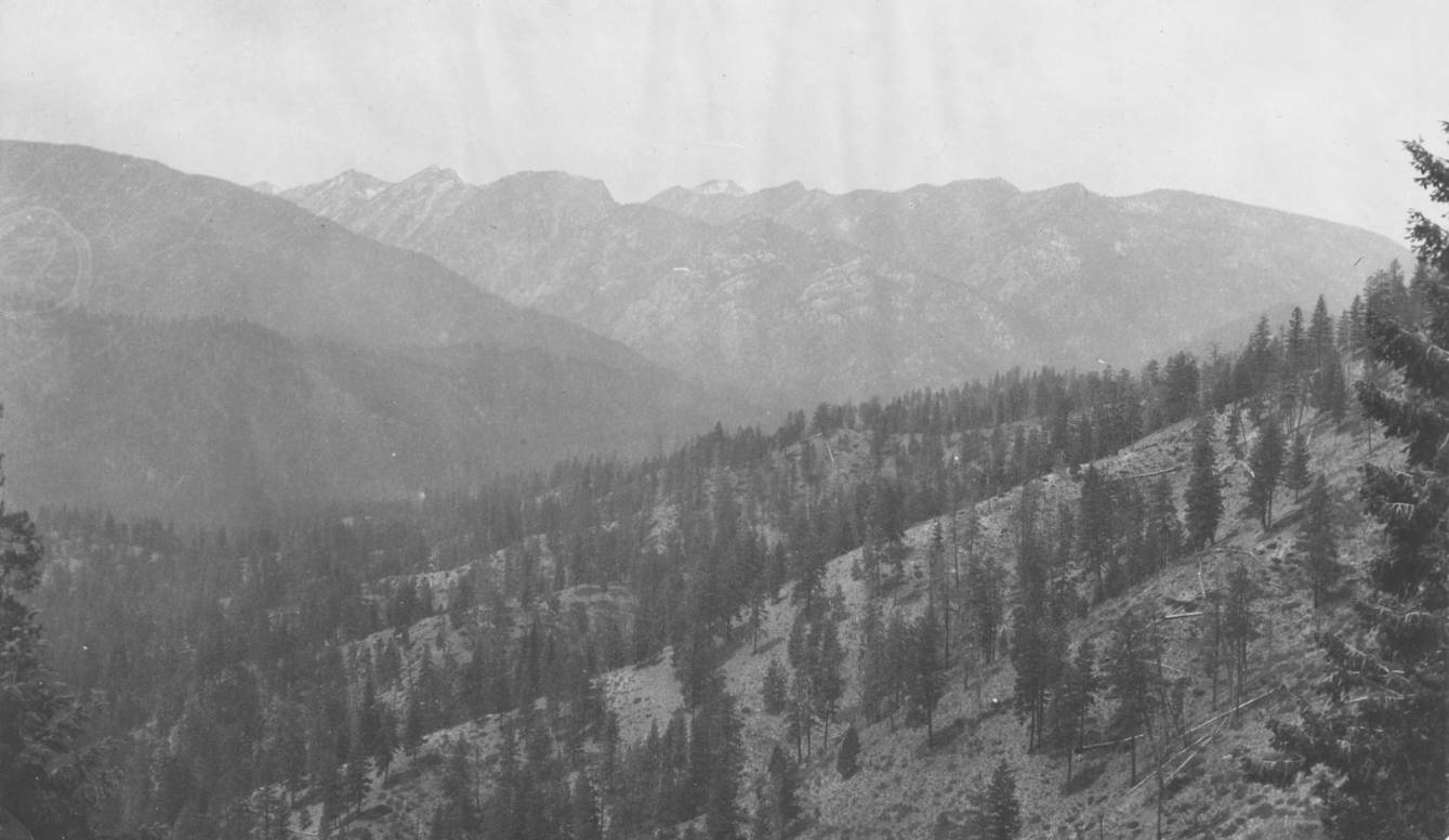item thumbnail for Bull pine forest on South Fork of Salmon River