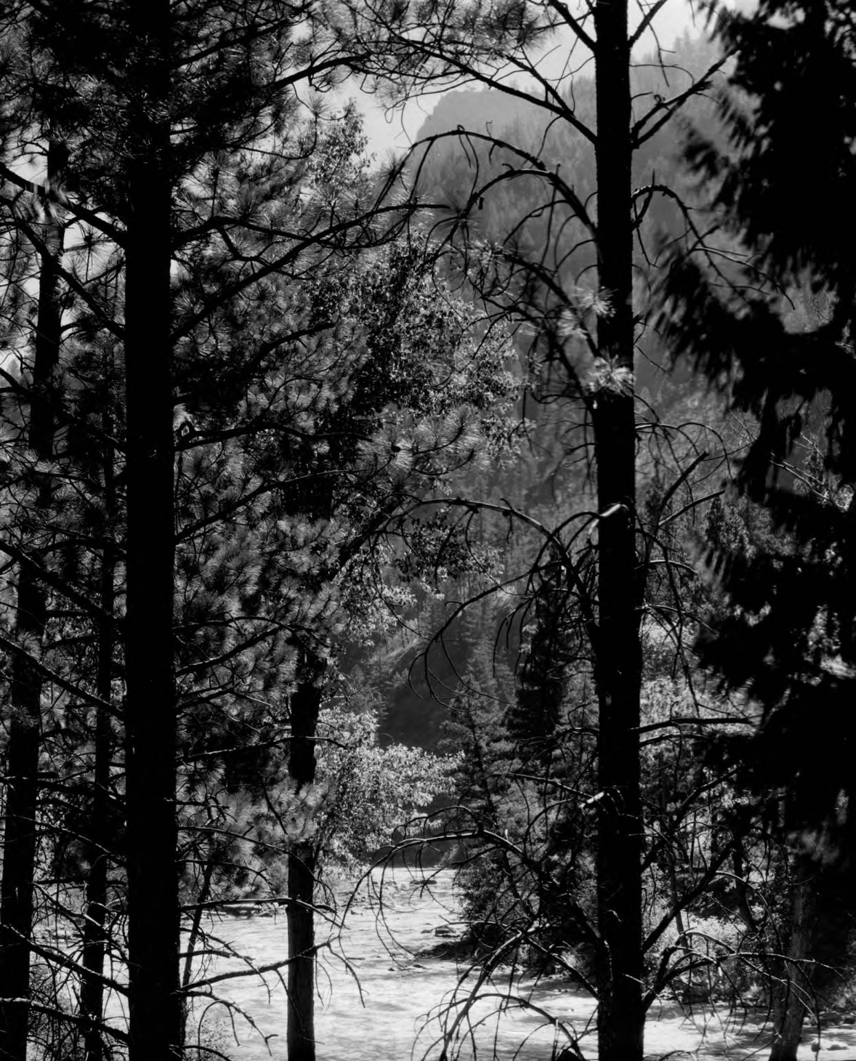 item thumbnail for Middle Fork of the Salmon River below Pistol Creek through trees