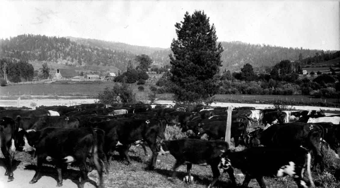 item thumbnail for Cattle on way to summer range