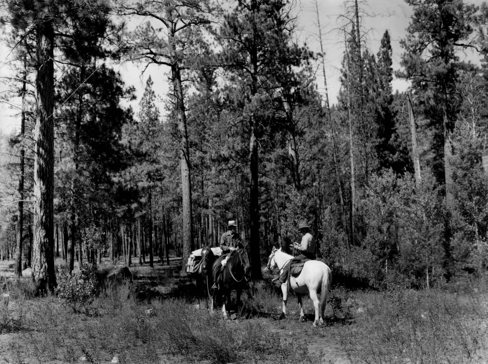 item thumbnail for Forest patrol on horseback, issuing campfire permit