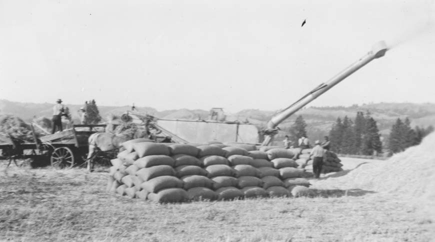item thumbnail for Barley harvest in bags