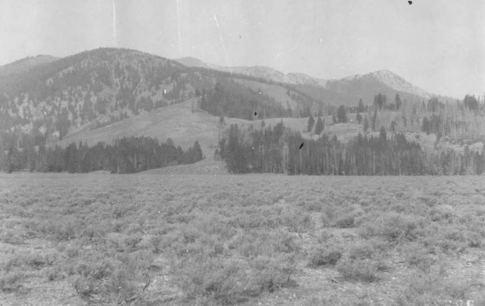 item thumbnail for Timbered slope on eastside of Salmon River