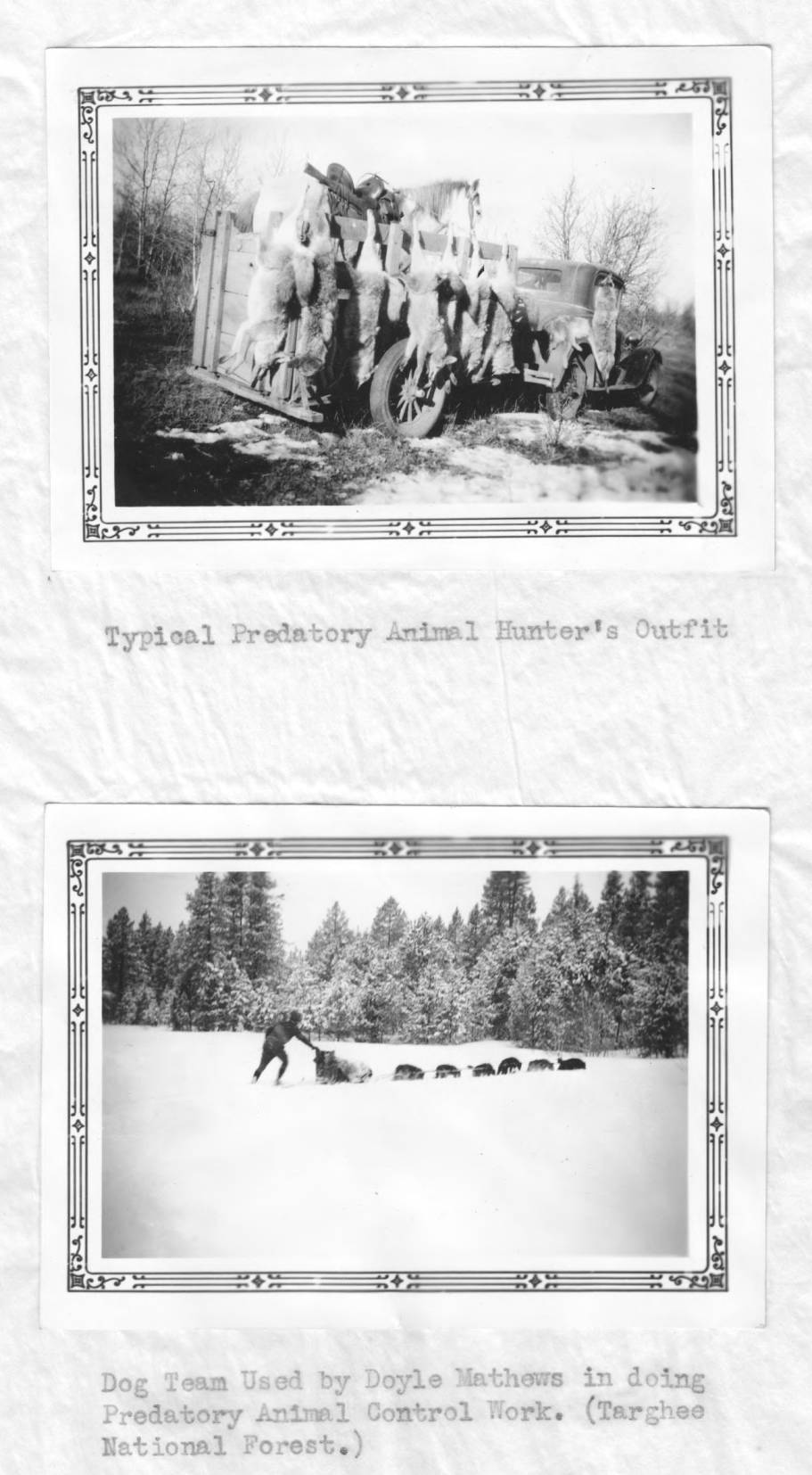 item thumbnail for Horse and trailer hung with coyotes
