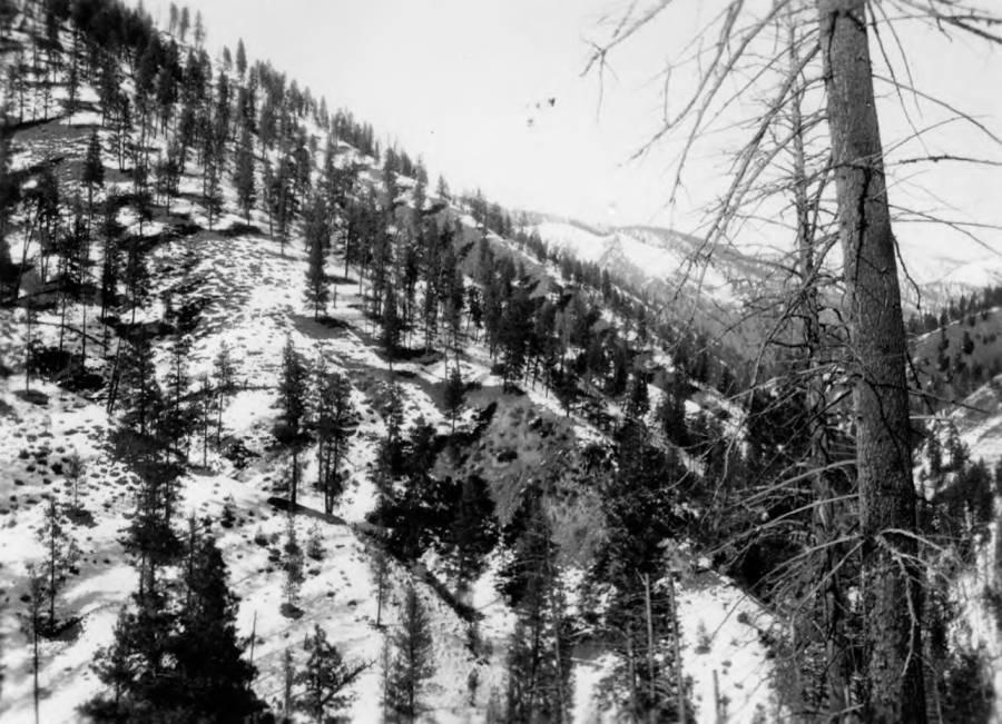 item thumbnail for South slope of McColla Creek, Chamberlain Basin