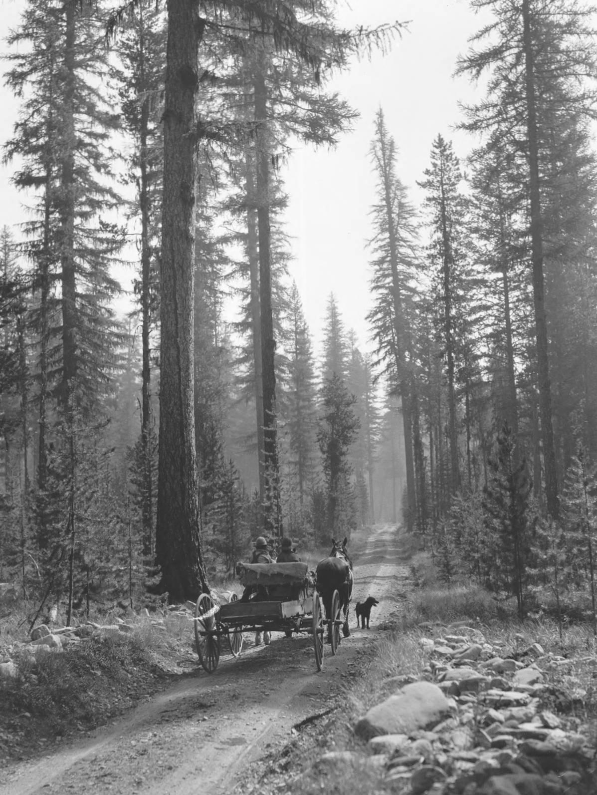item thumbnail for Horse drawn wagon on wagon trail, dog to side, near Yaak