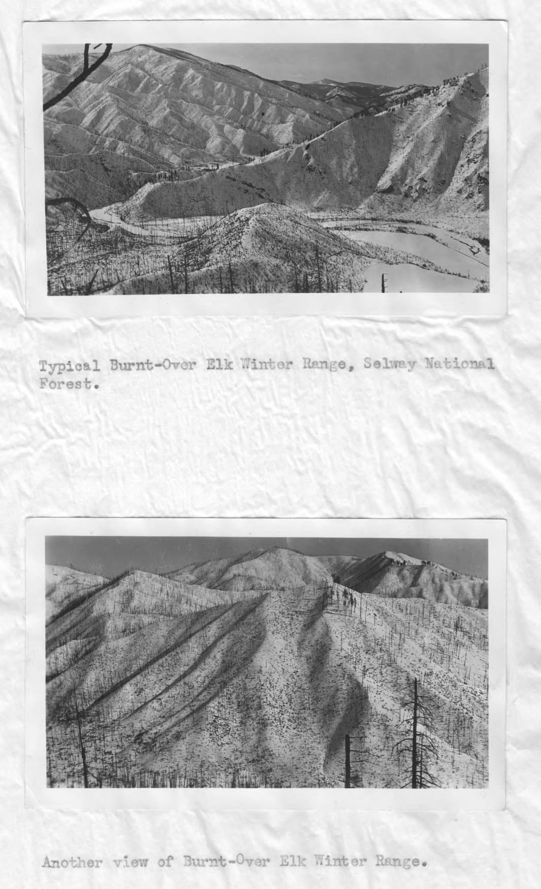 item thumbnail for Post-burn scenes of Elk Winter Range, Selway National Forest