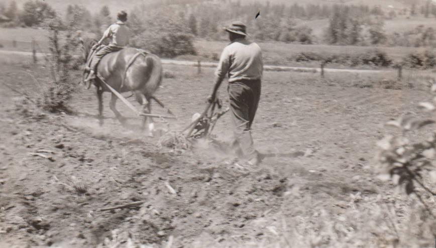 item thumbnail for 4H Club member plows corn field