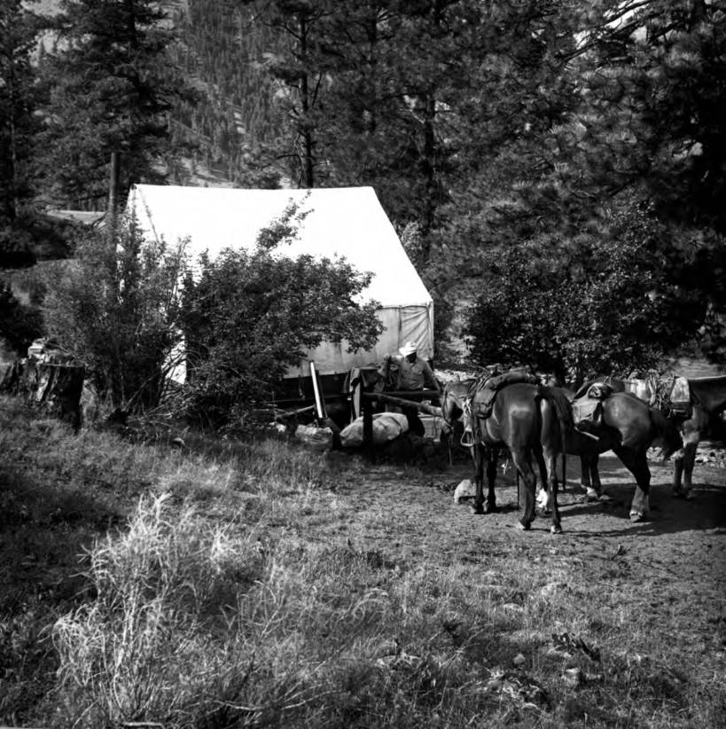 item thumbnail for Tent and horses at Simplot Administrative site, Lynn Creek