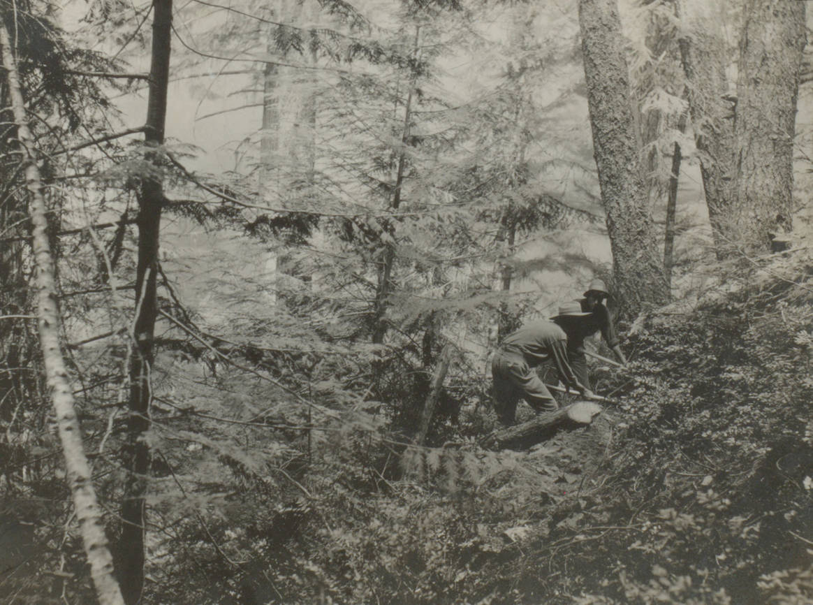 item thumbnail for Cutting a fire line, Graham Creek