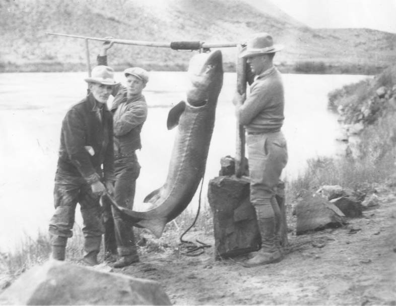 item thumbnail for Sturgeon caught for coyote scent, Snake River