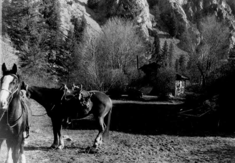 item thumbnail for Horses at Tappan Ranch