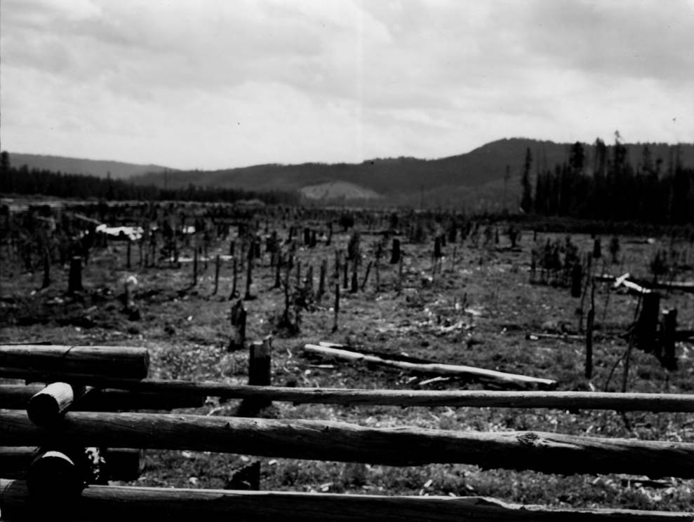 item thumbnail for Burned area at Lodgepole Point, Chamberlain