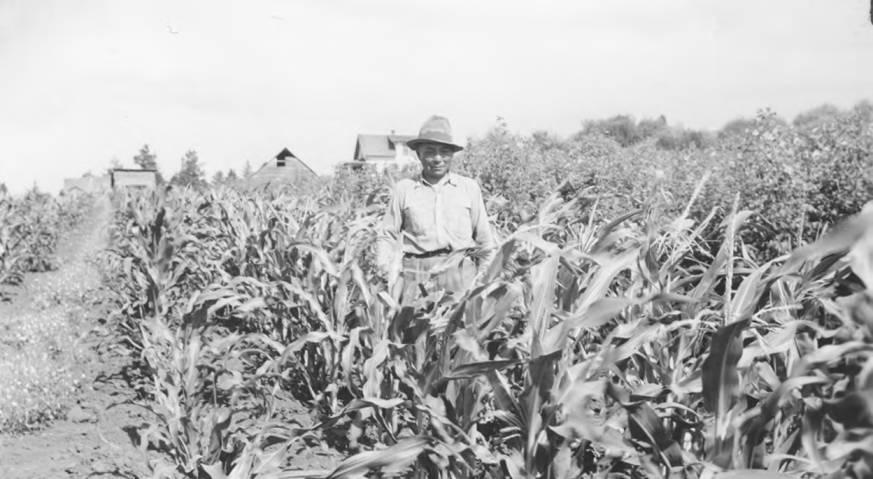 item thumbnail for Corn garden and gardener