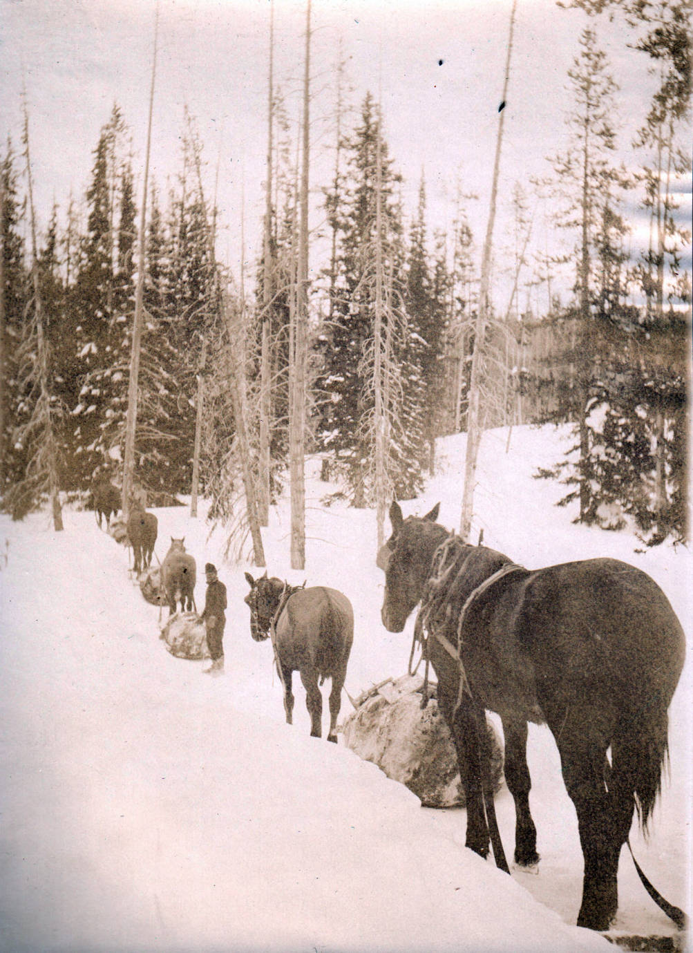 item thumbnail for Pack train on raw-hide trail in snow, Buffalo Hump