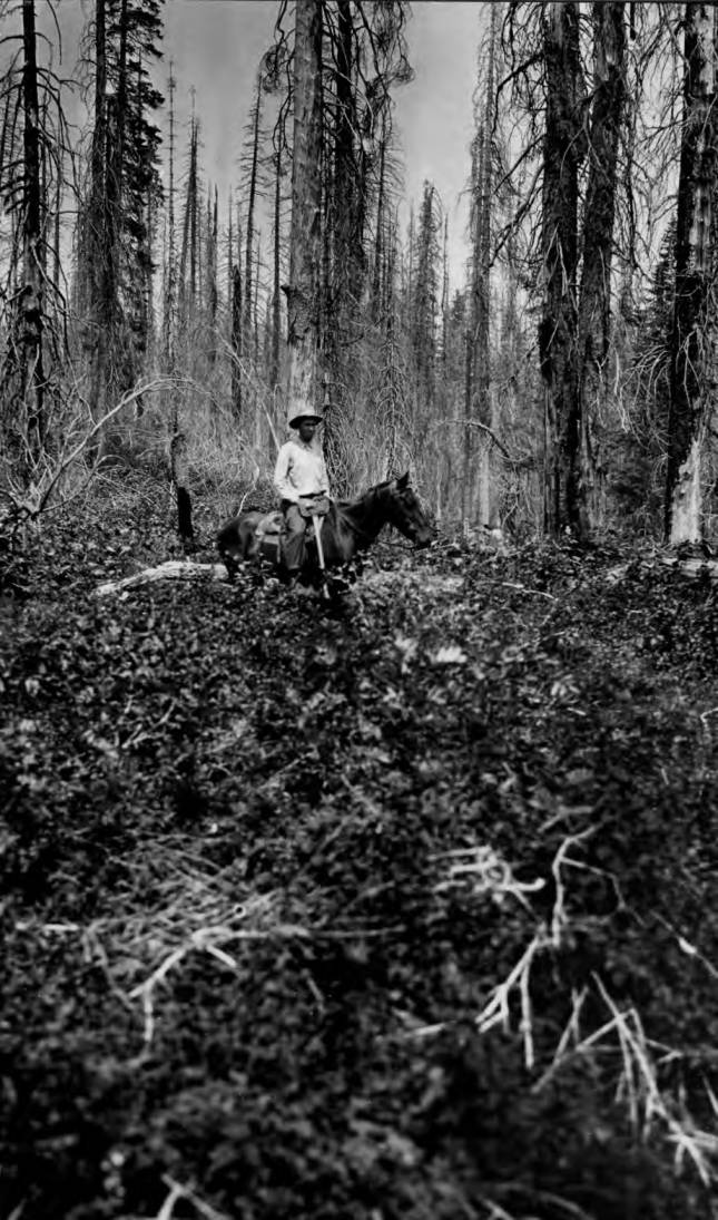 item thumbnail for Man on horse in burned area near mouth of Alder Creek