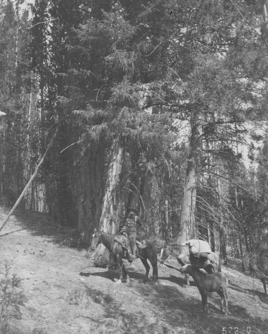 item thumbnail for Pack horses and rider near Chamberlain Basin