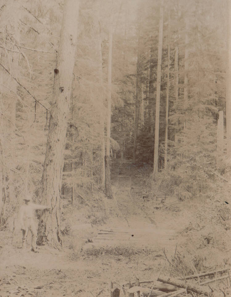 item thumbnail for Man stand near trees and forest area between Priest River and Priest Lake