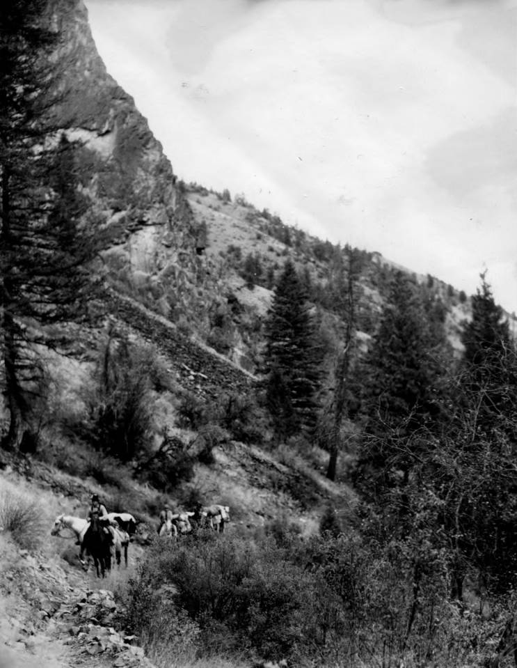 item thumbnail for Pack string, Idaho Primitive Area, Idaho National Forest