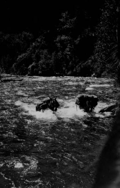 item thumbnail for Pack string crossing Big Creek at the mouth of Monumental Creek