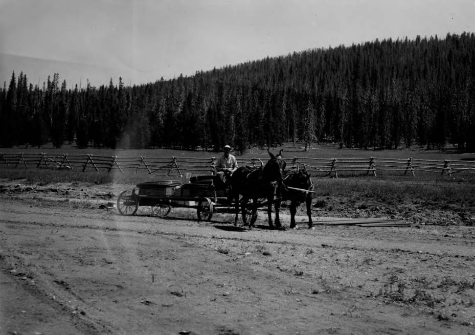 item thumbnail for Cold Meadows Guard Station, man on mule-pulled wagon