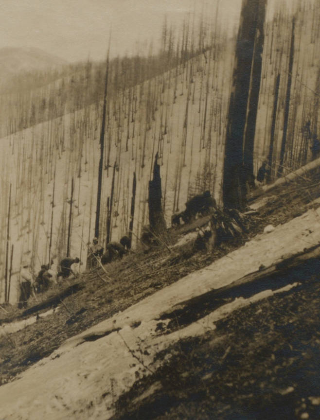 item thumbnail for Men planting trees after burn
