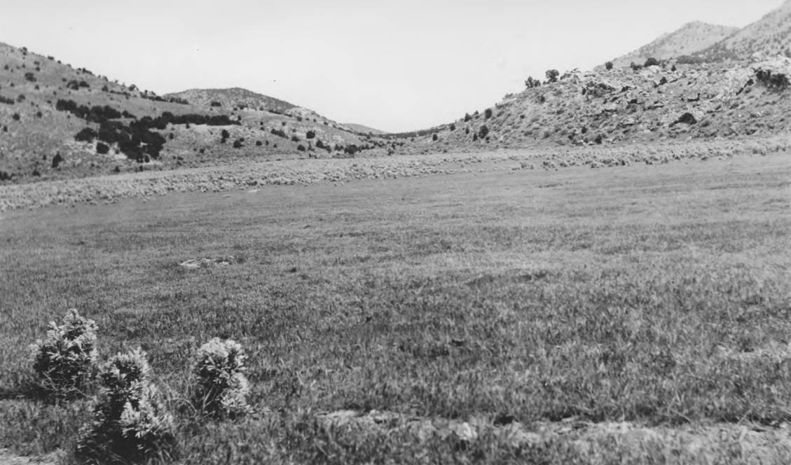 item thumbnail for Range revegetation, reseeded area near Bannock Creek