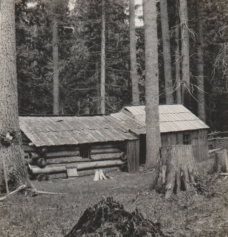 item thumbnail for Lindquist cabin and homestead, possible false homestead claim, Marble Creek