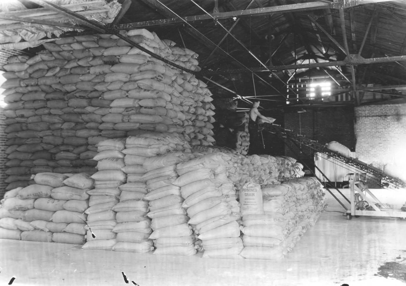 item thumbnail for Poisoned grain stacks in warehouse