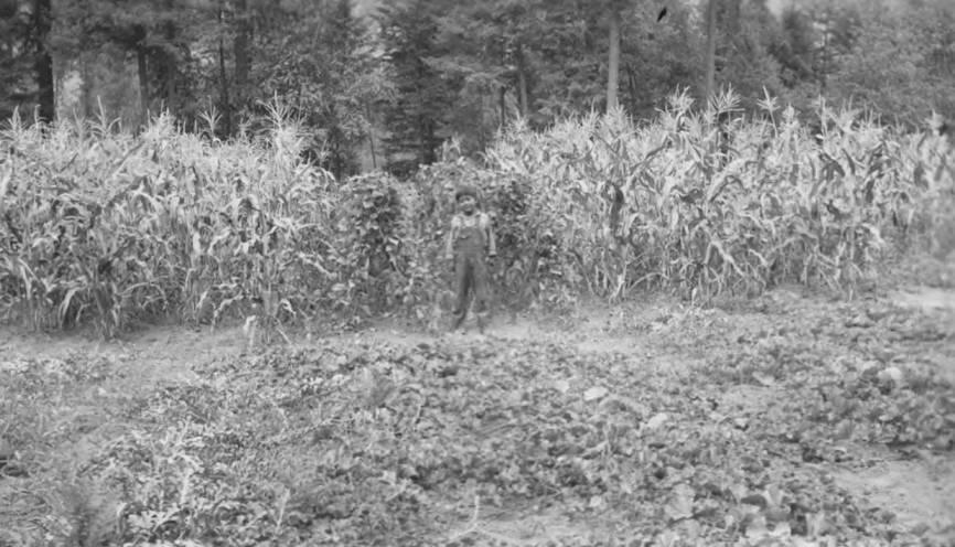 item thumbnail for Boy near corn patch, Orofino