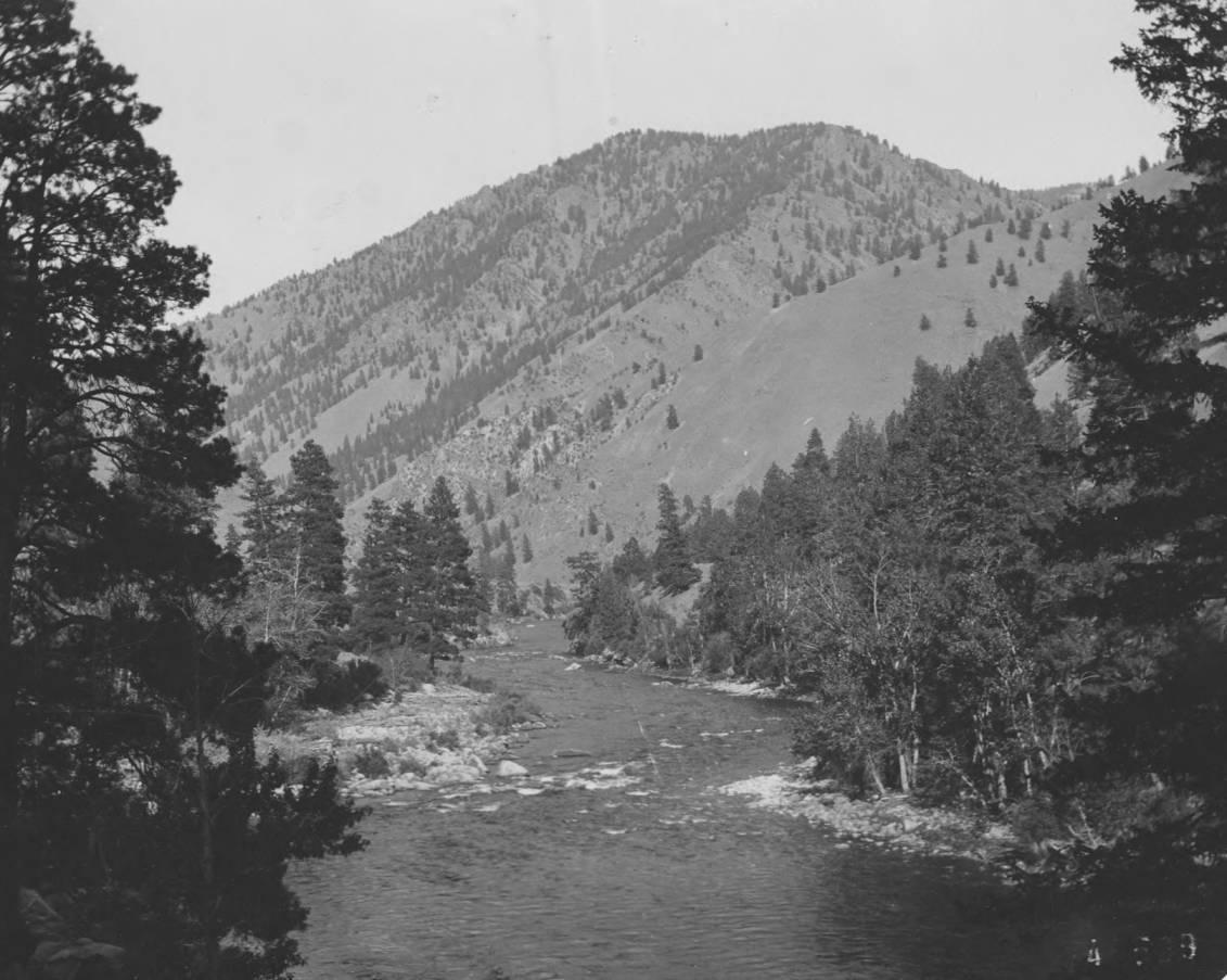 item thumbnail for Middle Fork Canyon, Bull Pine along banks