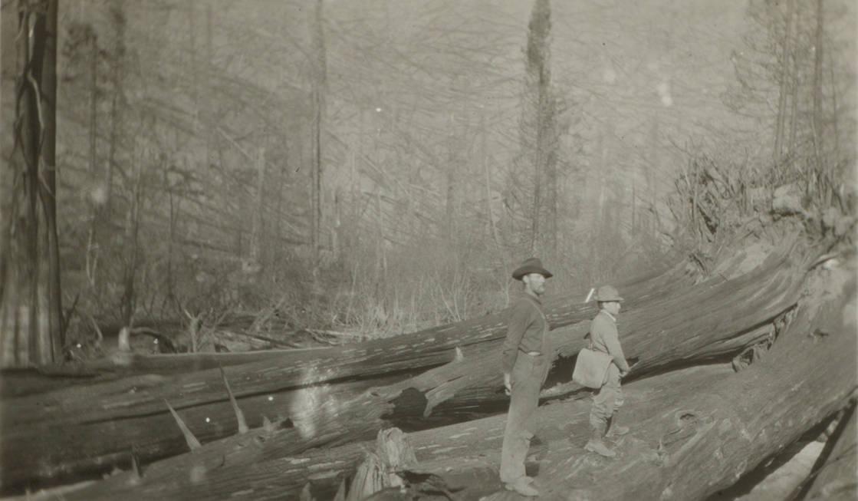 item thumbnail for Men stand on burn fallen trees