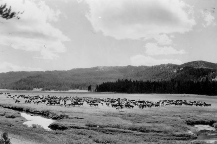 item thumbnail for Fall cattle round-up in Bear Valley, Sawtooth National Forest