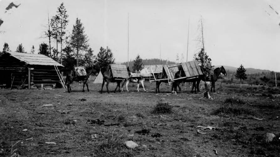 item thumbnail for Pack train leaving Chamberlain with materials for lookouts, loaded horses