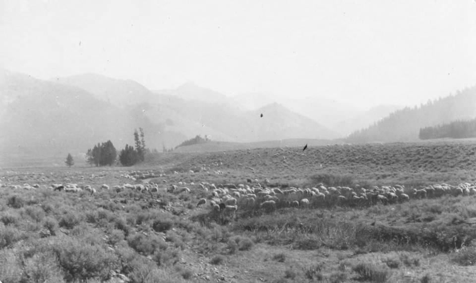 item thumbnail for Sheep grazing lands at head of Salmon River, portion of background in reserve